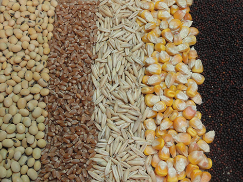 Ingredients and Manufacturing Process for Fish Feed