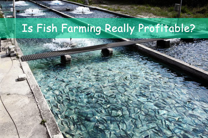 Is Fish Farming Really Profitable? – Fish Feed Extruder